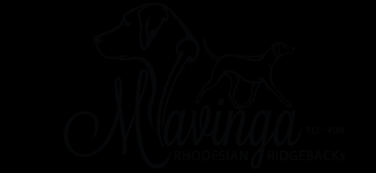 MAVINGA – Rhodesian Ridgebacks